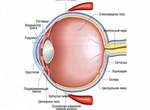 Глазные орбиты