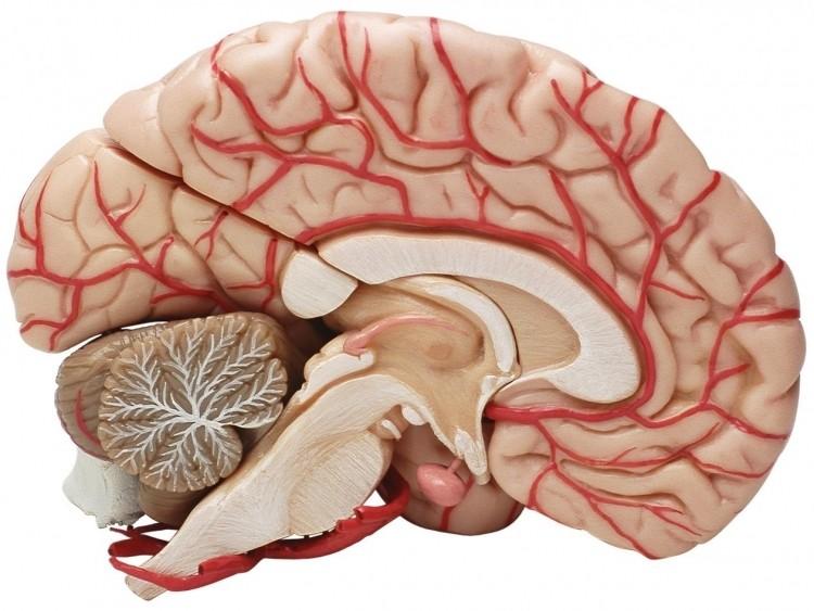 МРТ сосудов головного мозга в Чертаново